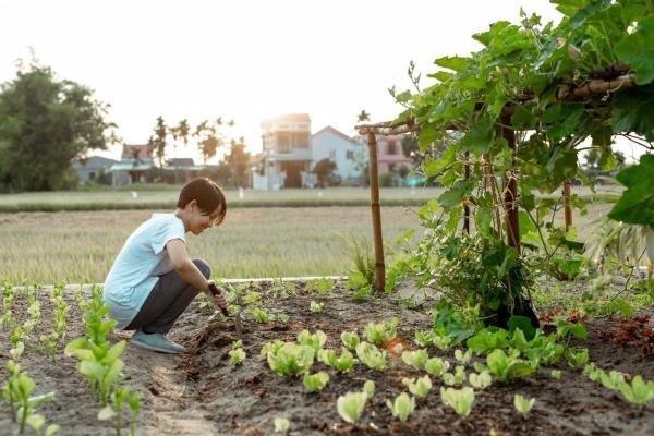 vườn rau xanh của căn nhà